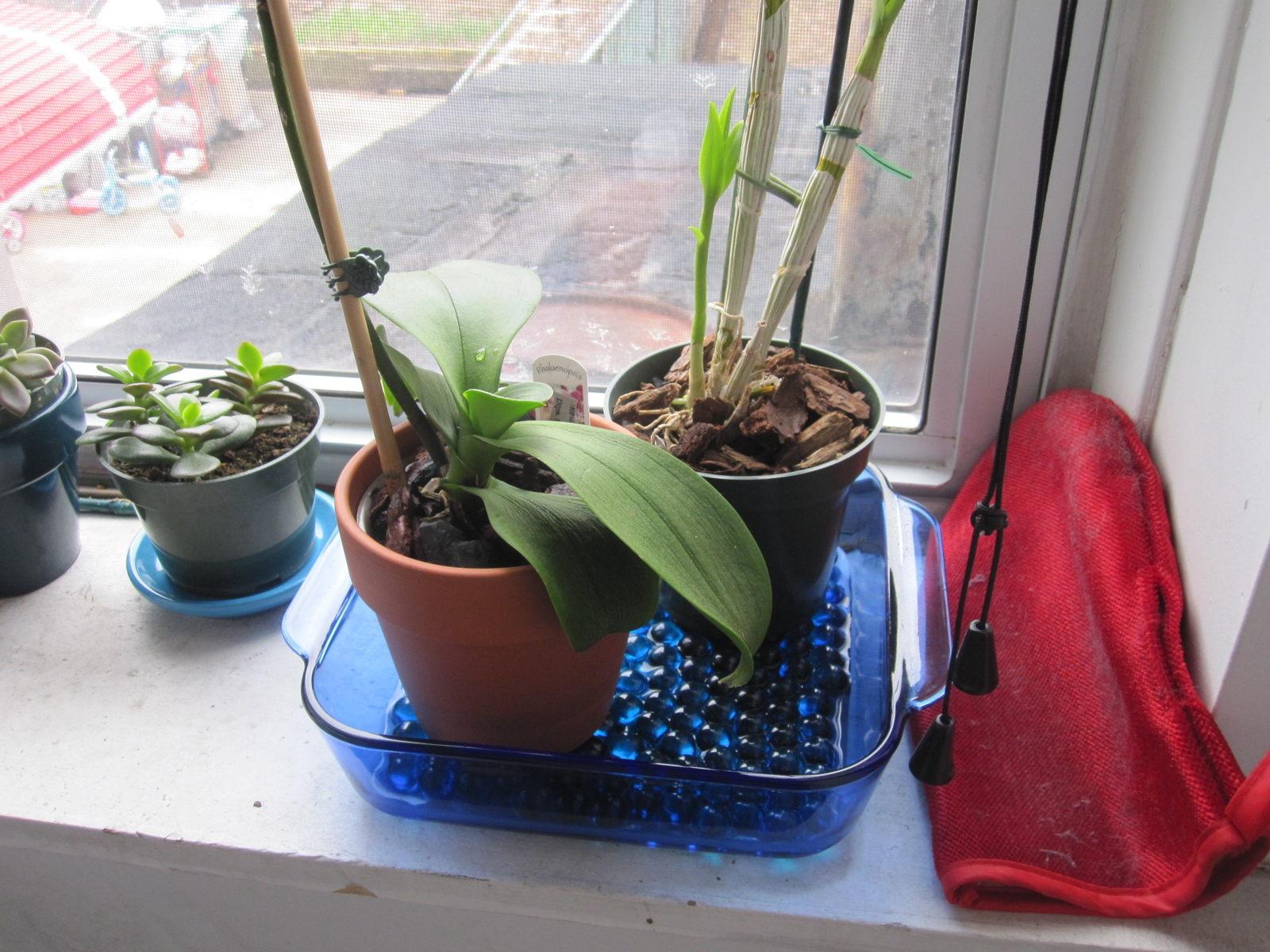 How to Make a Humidity Tray Brooklyn Orchids #1D5FAE