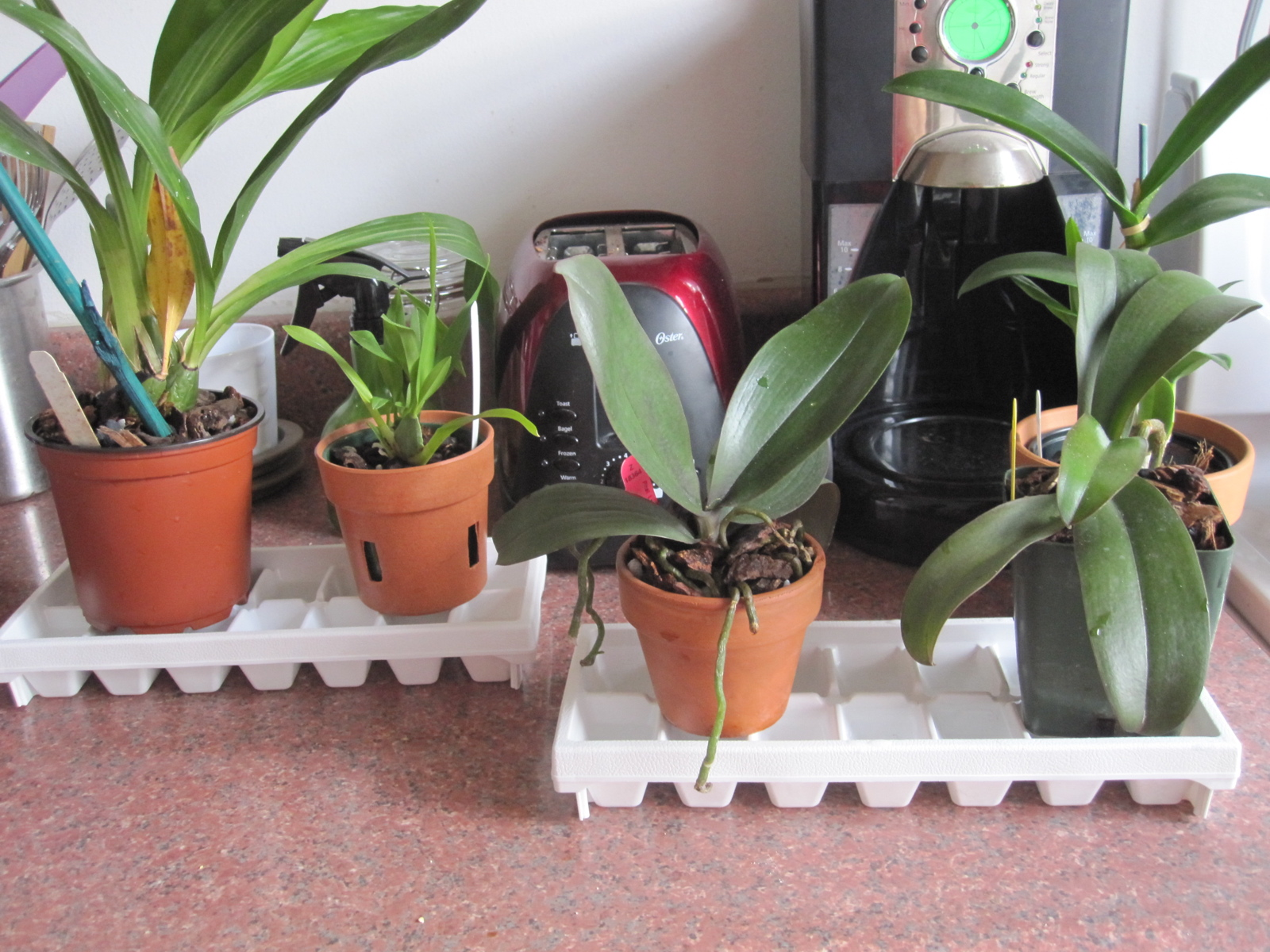 How to Make a Humidity Tray Brooklyn Orchids #994C32