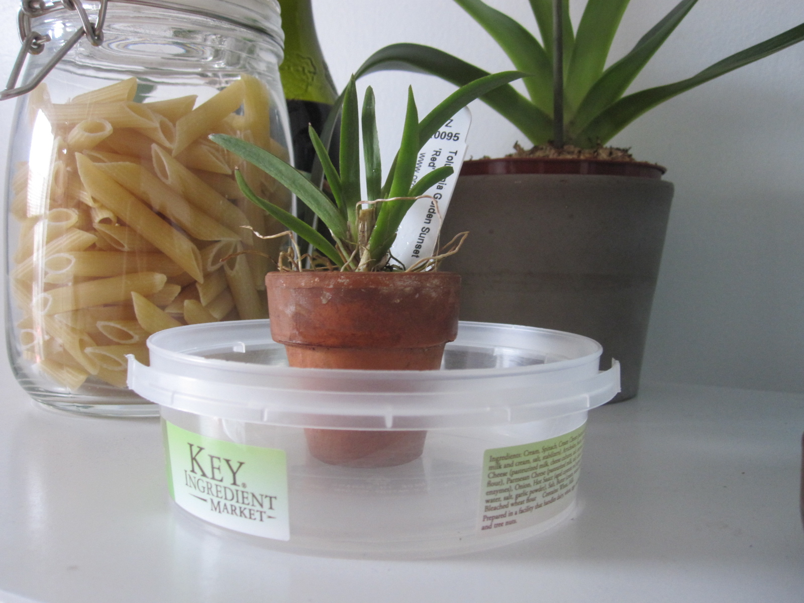 How to Make a Humidity Tray Brooklyn Orchids #694531