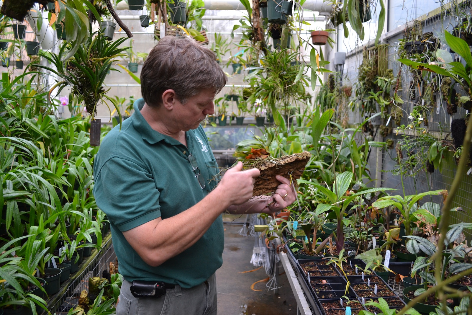 Dave Horak, BBG Orchid Curator. Photo by Elizabeth Peters